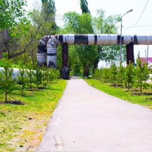 2021.05.23 высадка деревьев на приходе Николо-Игнатьевского храма(97)