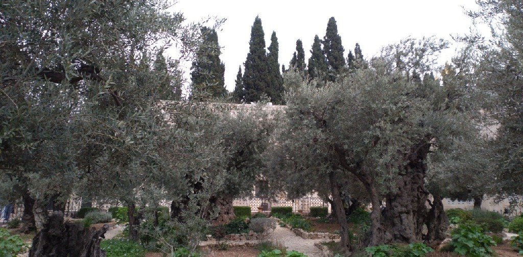 израиль_14